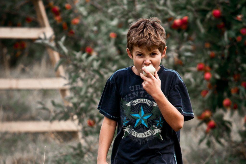 Jongen appelboomgaard